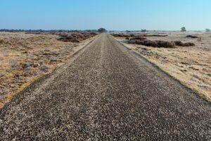 Empty Road Through Veluwe Heathland In Winter.